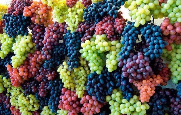 druiven-muur-verschillende-kleuren