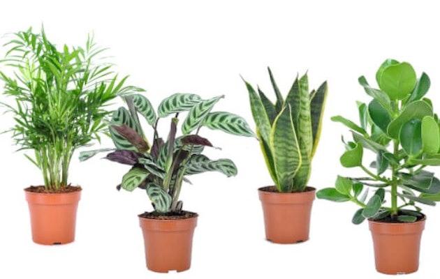 overzicht-planten-easycare
