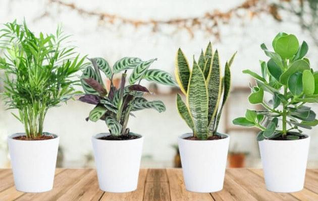 perfect-plant-easycare-planten