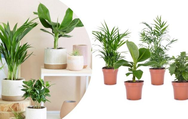 hoofdfoto-mix-kamerplanten