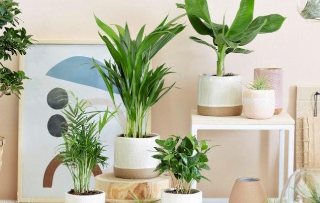 kamerplanten-divers-woonkamer