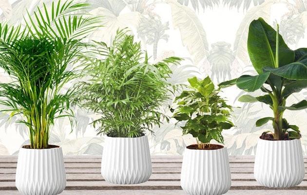 Mix-van-4-trendy,-exotische-kamerplanten-1